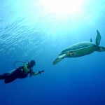 Diving Derawan