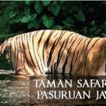Wisata Taman Safari Prigen